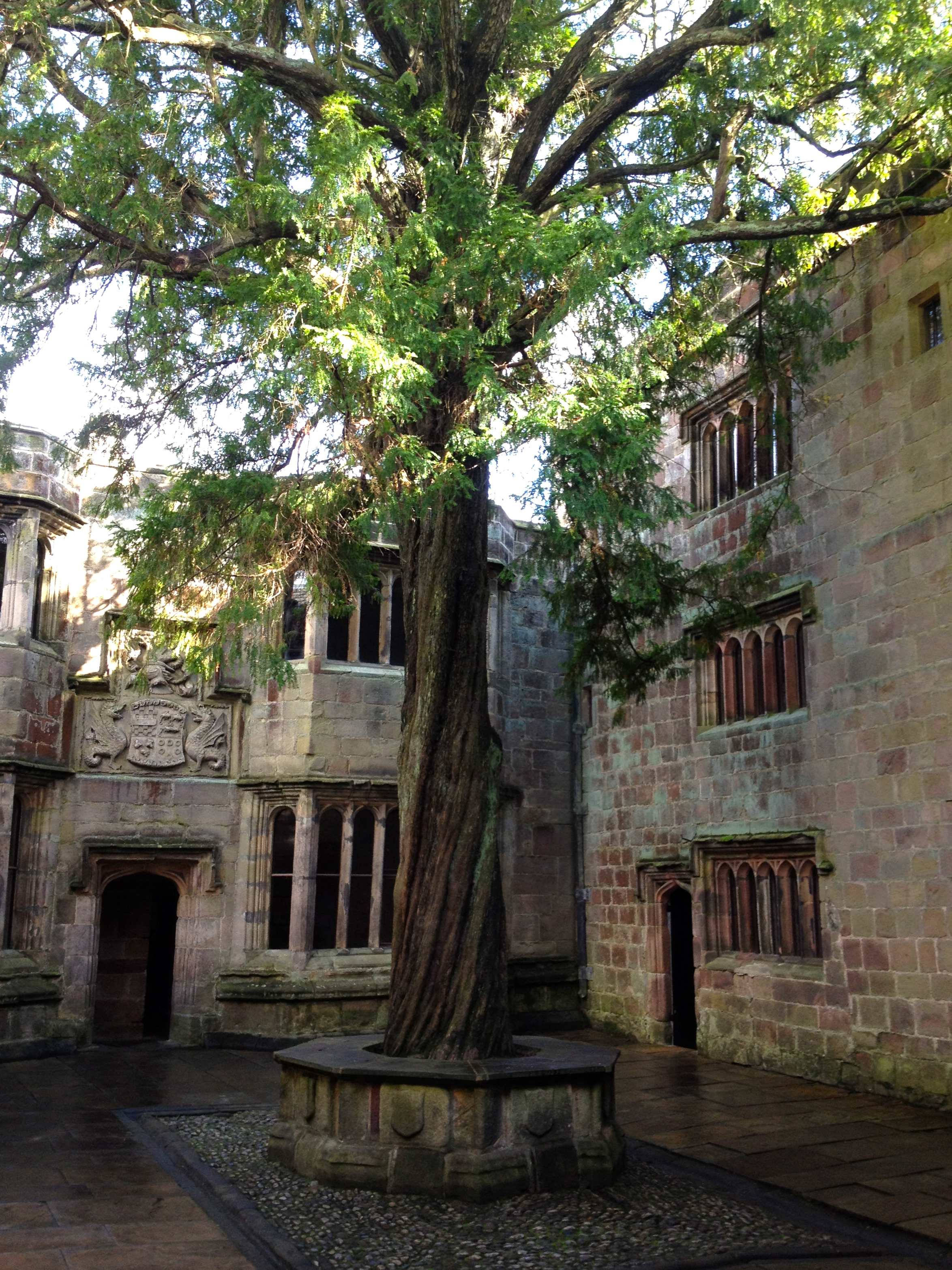 An old tree with a big trunk and lush green leaves surrounded by stone buildings